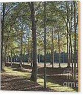 Island Fort Road Ninety Six National Historic Site Wood Print