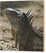 Island Lizards Three Wood Print