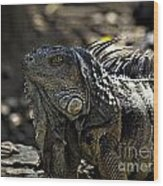 Island Lizards Two Wood Print