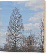Island Of The Black-crowned Night Heron Wood Print