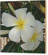 Island Plumeria Wood Print