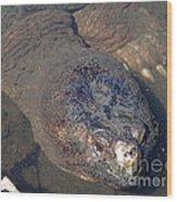 Island Turtle Wood Print