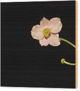 Isolated Pink Wood Print