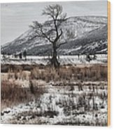 Isolation In Yellowstone Wood Print