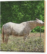 Itchy Horse Wood Print