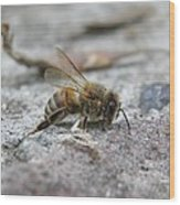 It's A Hard Life Little Bee Wood Print