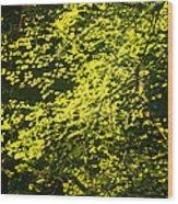 It's Autumn Time Wood Print