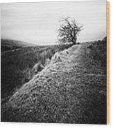 Its Hard To Imagine Wood Print by John Farnan