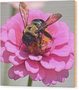 It's Mine Said The Bee Wood Print