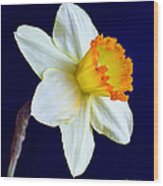 It's Spring - Square Wood Print