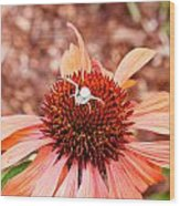 Itsy Bitsy Spider Walking On The Flower Wood Print