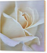 Ivory And Pink Abstract Rose Flower Wood Print