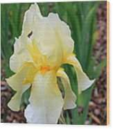Ivory And White Iris Wood Print