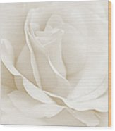 Ivory Ballerina Rose Flower Wood Print