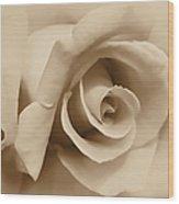 Ivory Brown Rose Flower Wood Print