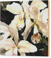 Ivory Cattleya Orchids Wood Print