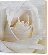 Ivory Rose Flower Wood Print