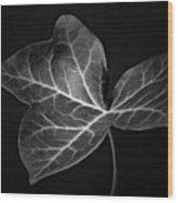 Black And White Flowers Macro Photography Art Work Wood Print