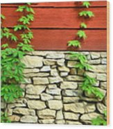 Ivy On Stone And Wood Wood Print