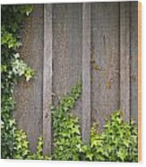 Ivy Wall Frame Wood Print