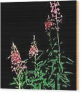 J7046 Wood Print