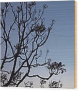 Jacaranda Sunset Wood Print by Rona Black
