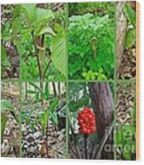 Jack-in-the-pulpit Wildflower    Arisaema Triphyllum Wood Print