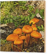Jack Olantern Mushrooms 22 Wood Print