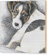 Jack Russell Puppy Wood Print