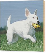 Jack Russell Terrier Dog Wood Print