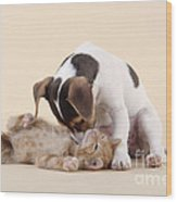 Jack Russell Terrier Puppy And Kitten Wood Print