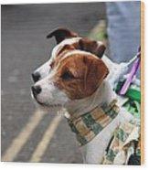 Jack Russell Terriers Wood Print