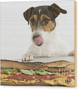 Jack Russell With Sandwich Wood Print