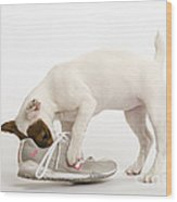 Jack Russell With Sneaker Wood Print