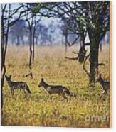 Jackals On Savanna. Safari In Serengeti. Tanzania. Africa Wood Print