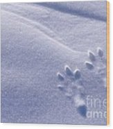 Jackrabbit Tracks In Snow Wood Print
