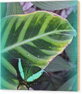 Jade Butterfly With Vignette Wood Print