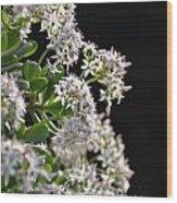Jade Plant Flowers Wood Print
