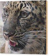 Jaguar-09498 Wood Print