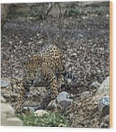 Jaguar 4 Wood Print