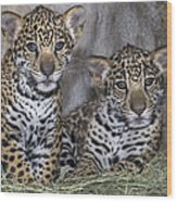 Jaguar Cubs Wood Print