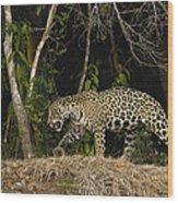 Jaguar Cuiaba River Brazil Wood Print