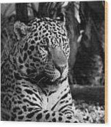 Jaguar Mono Wood Print