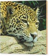 Jaguar Portrait Wood Print