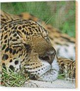 Jaguar Resting Wood Print
