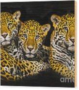 Jaguars Wood Print