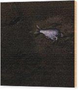 Jalama Fish Wood Print