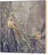January Cardinals Wood Print