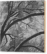 January Tree Wood Print