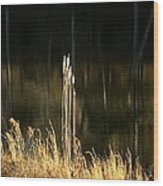 January's Gold 2013 Wood Print